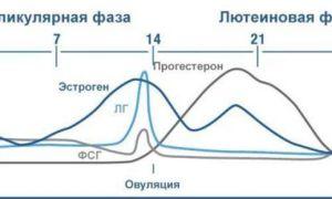 Созревание фолликула: по дням цикла, причины несозревания