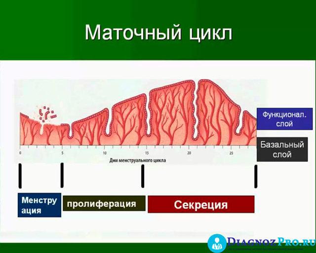 Гистероскопия: на какой день цикла делается, показания