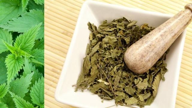 Крапива при обильных месячных: свойства, народные рецепты