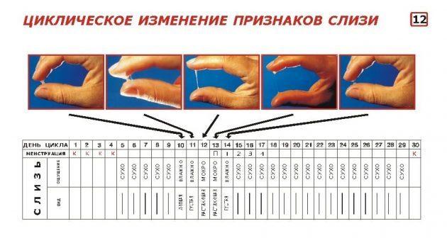 Выделения до и после овуляции в картинках