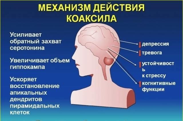 Успокоительные средства при климаксе: популярные препараты