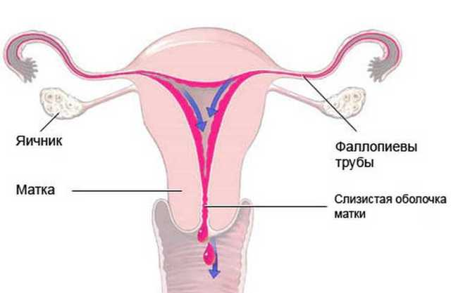 Фазы менструационного цикла: характеристика, особенности