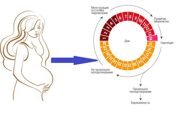 Короткий цикл месячных: причины, возможные патологии