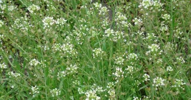 Кровоостанавливающие травы при обильных месячных