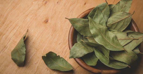 Лавровый лист для месячных: свойства, рецепты, применение