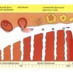 Скудные месячные при беременности на ранних сроках: причины