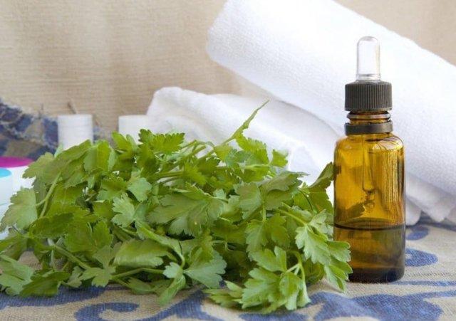 Петрушка для месячных: лечебные рецепты отваров и настоев