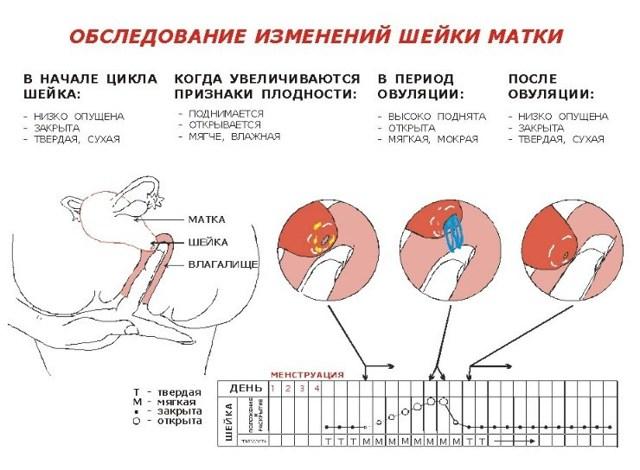 Боль в боку при овуляции: причины, характер, методы лечения