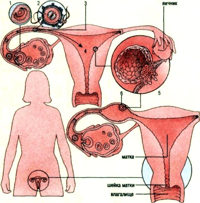 Кровянистые выделения после осмотра гинеколога: как реагировать