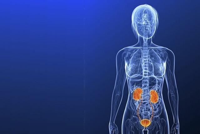 Можно ли делать УЗИ во время месячных: показания для процедуры