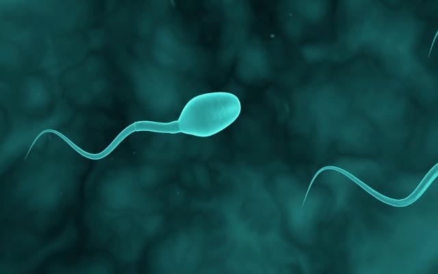 Сколько живет яйцеклетка после овуляции и почему это важно
