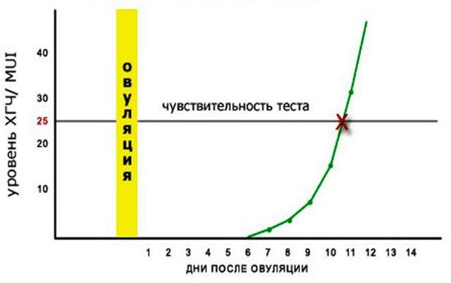 ХГЧ по дням после овуляции: концентрации и причины их изменения