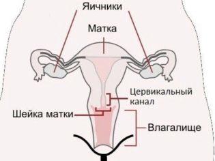 Слизь во время овуляции и ее роль при зачатии
