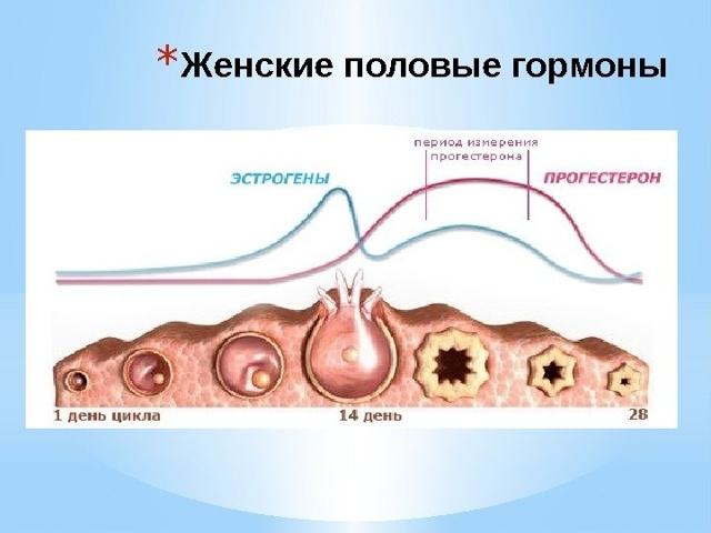 Болит грудь в середине цикла: причины, нужно ли лечить