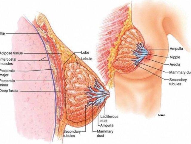 Пролактин повышен у женщины: причины, симптомы, лечение
